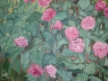 Poppies in Carlow 1m x1m oil